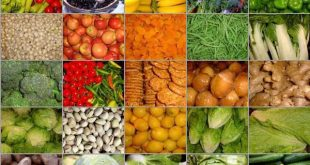 Pemikiran Baru Diversifikasi Pangan : Mengembangkan Pangan, Hortikulutra, Bumbu-Bumbuan dan  Obat-Obatan Masa Depan Berbasis Pohon